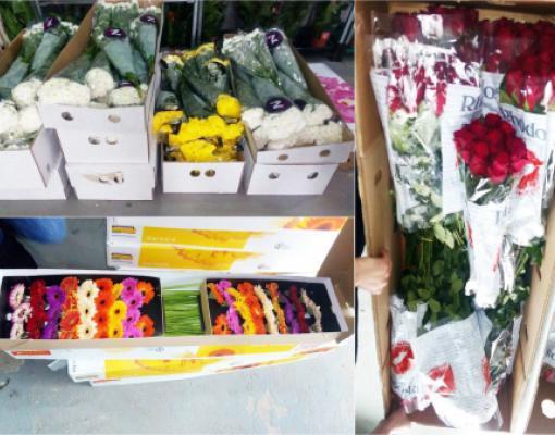 Контрабандные цветы