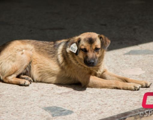бродячие животные в Бельцах