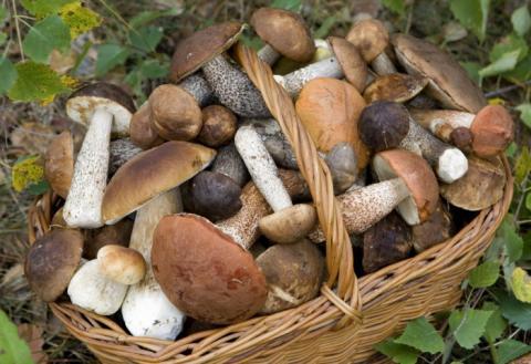 Сбор грибов Молдова