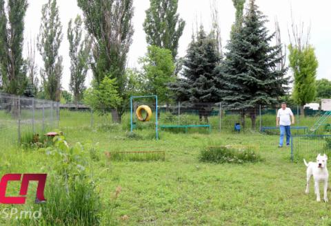 Площадка для выгула собак в Бельцах