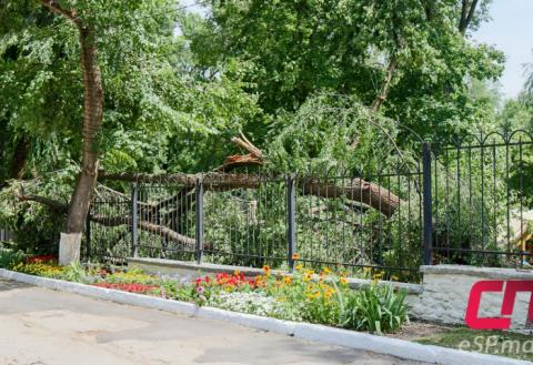 Дерево упало на забор