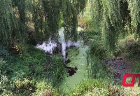 Река Реут