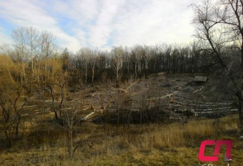 Вырубка деревьев на  Комсомольском озере