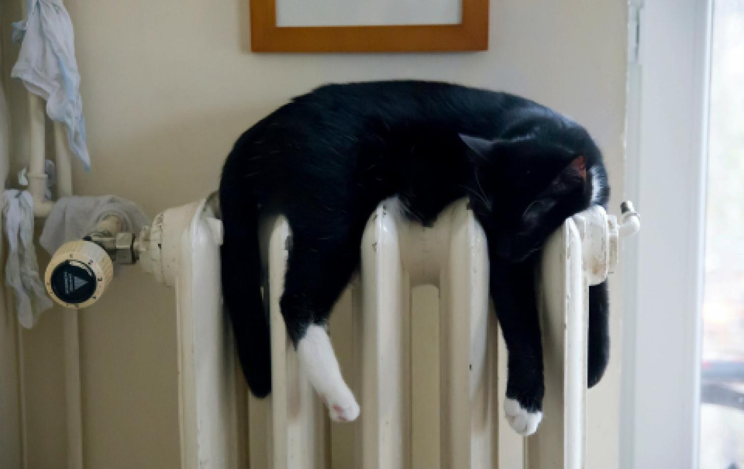 Кошка на батареи отопление