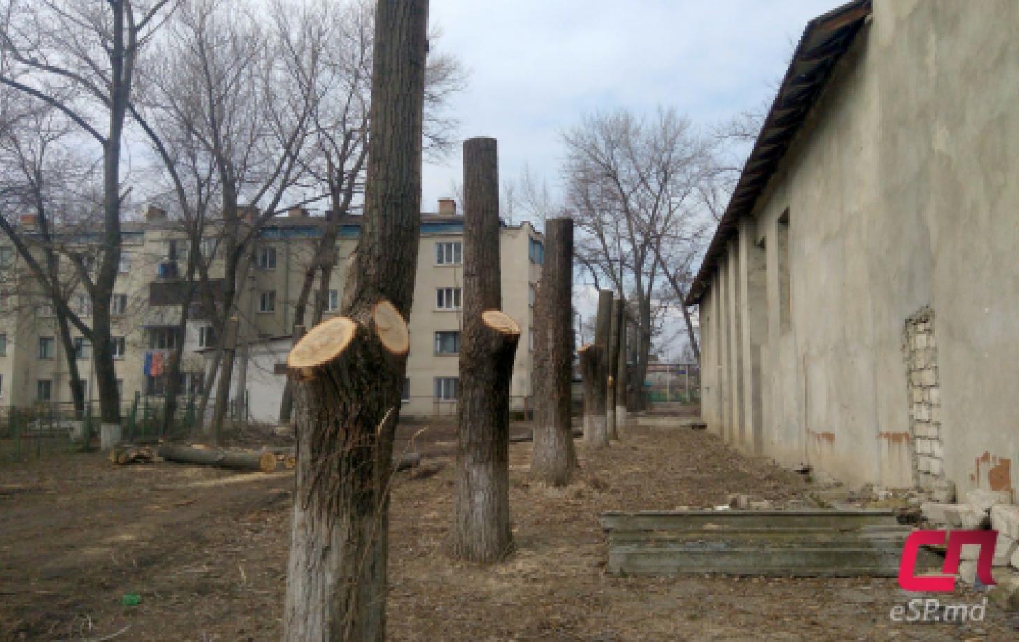 Омоложение деревьев в Бельцах