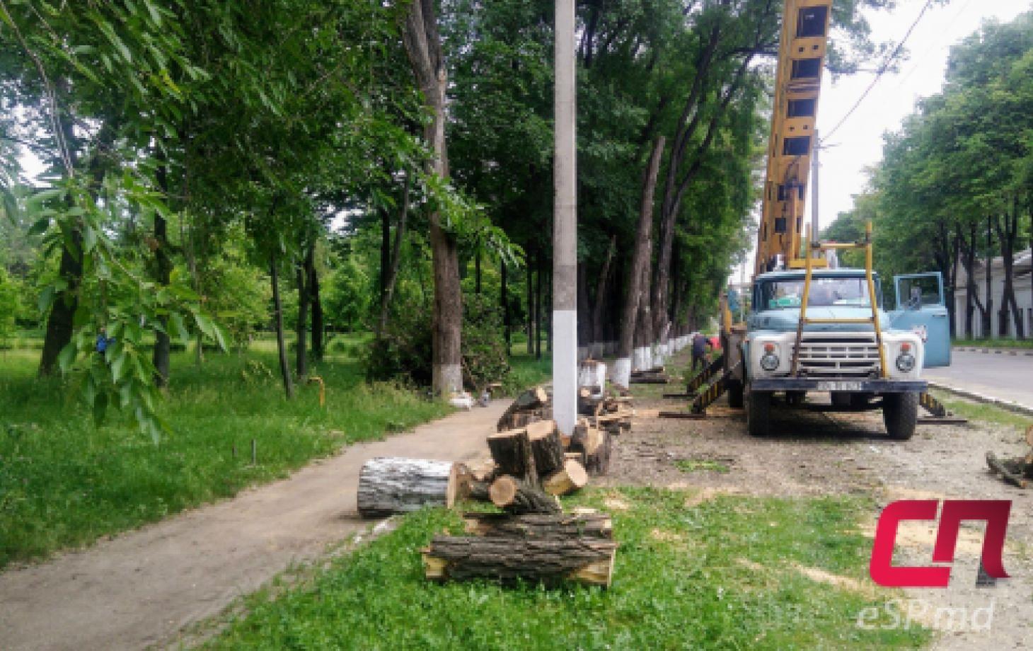Парк Победы, вырубка деревьев