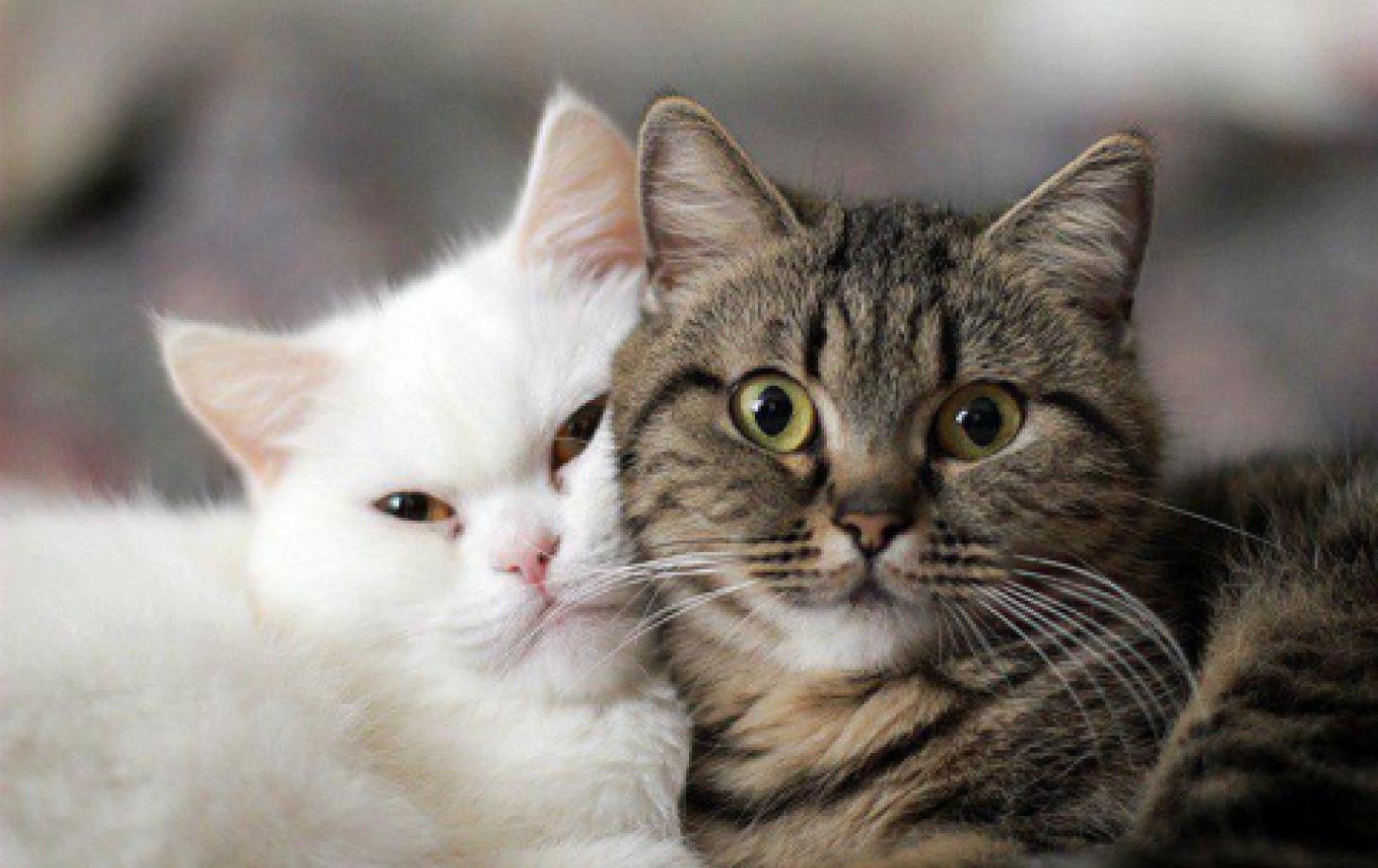 Картинки с кошками я люблю тебя