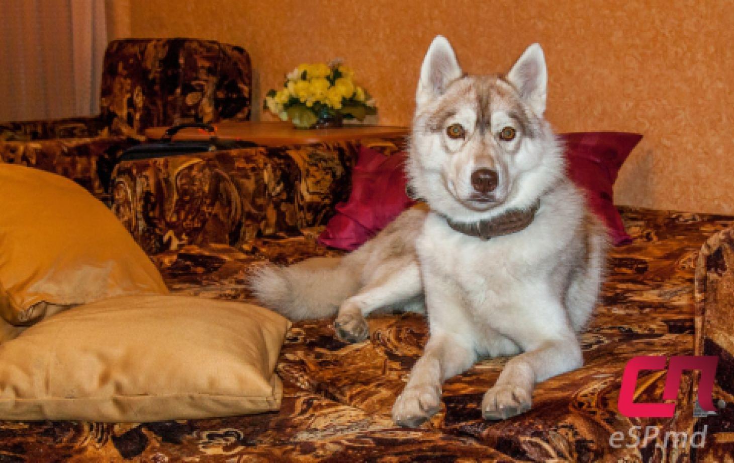 Бельчанин приручил белую волчицу